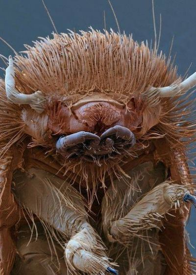 Bugs III