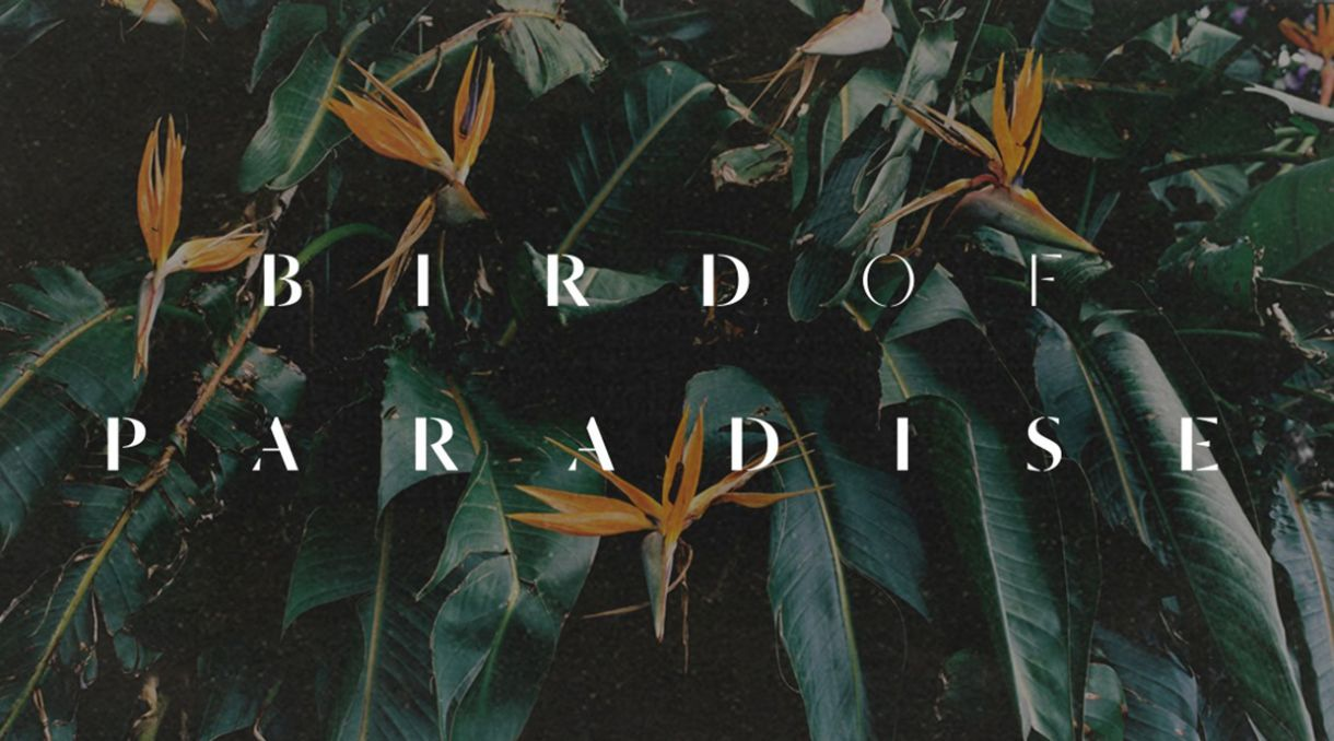 Karnan Saba & Hone Be Good Drop Album 'Bird Of Paradise'